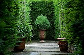Boxwood in a pot of Anduze before a hedge If France