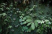 Wall plant in the Garden of Paradise Cordes-sur-Ciel Tarn