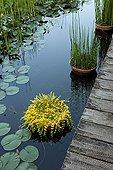 Basin and plants aquatiques Garden of Paradises Tarn