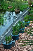Pots of Canna before a Garden of Paradise Tarn