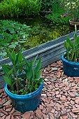 Pots de Canna devant un bassin Jardin des Paradis Tarn
