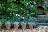 Creeping Charlie Rose-tree Lilys and Strawflower