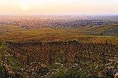 Sunrise over the vineyards in autumn Eguisheim France