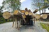 Transportation of logs Danum Valley Sabah Borneo Malaysia