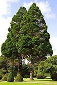 Arboretum of the Killarney NP Ireland