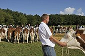Submission of Cows Contest agricultural Franche-Comte France