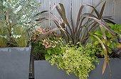 Plants in pot on a garden terrace