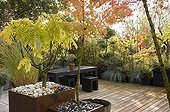 Maple and Chinese wisteria on a garden terrace