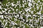 Leaf decomposition France