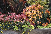Jardinière fleurie dans un jardin ; Diascia 'Little Dancer'. Muflier 'Sweetheart'