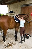 Setting up the saddle blanket on the back of a horse France