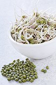 Germinated mung beans in a bowl