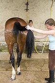 Cleaning Horse with jet France