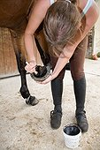 Greasing the foot of a Horse France