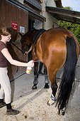 Spraying anti horseflies and mosquitoes on a Horse