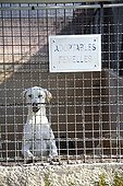 Dog awaiting adoption in shelters SPA France