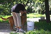 Volunteer walking with dog into a refuge SPA