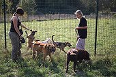 Volunteers walking with dog from a refuge SPA France