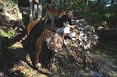 Volunteers bathing dog from a refuge SPA France