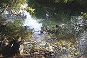 Volunteer bathing dog from a refuge SPA France