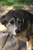 Portrait of dog in a shelter SPA France