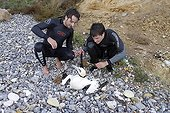 Surfers helping an Gannet injured by a hookNormandy France