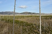Regeneration of a massive forest fire after Wyoming USA
