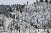 Forest have suffered a fire in the region Yancy Creek USA