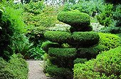 Topiary of yew in a garden