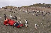 Touriste et Manchots papous Aitcho Island Shetland du Sud