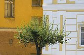 Tree cut in front of the house Baroque Czech Republic