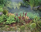 Mist in a tropical garden with pitcherplants  France