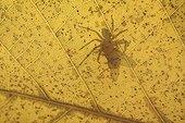 Ombre d'une Araignée capturant une Mouche sur une feuille