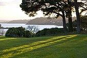 Maritime pine and grass Estuary Trieux Britain France