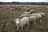 Sheep grazing temporary winter Provence France ; Management of soils