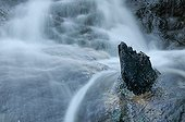 Strain on an alder calcified waterfall France
