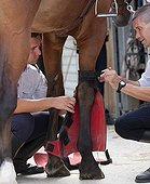 Cops put leggings on a horse French Mounted Police