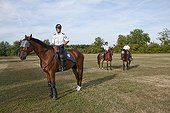 Protected Horses from the Unity of the French Mounted Police