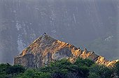 Rapaces dans le massif granitique d'Ambalavao Madagascar