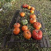 Potirons et Potimarrons sur une table de jardin en automne