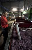 Making wine in a cellar Cotes de Beaune France ; Reassembling the wort and watering hat marc France