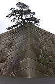 Tree and Wall Gardens of the Imperial Palace in Tokyo Japan