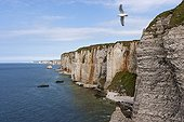 The cliffs of Etretat in spring France