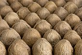 Nuts aligned for drying