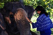 Asian Elephant injured by an anti-personnel mine Thailand ; He was treated and collected by Soraida Salwala, founder of a hospital for elephants
