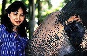 Asian Elephant injured by an anti-personnel mine Thailand ; It was treated and collected by Soraida Salwala, founder of a hospital for elephants