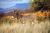 Donkey in a meadow in autumn Provence France