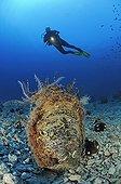 Noble Pen Shell and Diver, Cres Island, Mediterranean Sea, Croatia