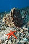 Protected Noble Pen Shell, Les Ferranelles, Medes Islands, Costa Brava, Mediterranean Sea, Spain