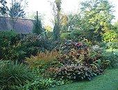 Garden through the seasons Autumn Le Clos du Coudray ; Hosta X tardiana 'Halcyon'